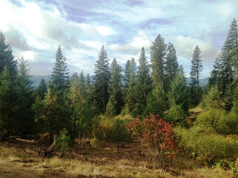 south cle elum big and beautiful singles Hotels near south cle elum rail yard national historic district, south cle elum on tripadvisor:  the view was beautiful.